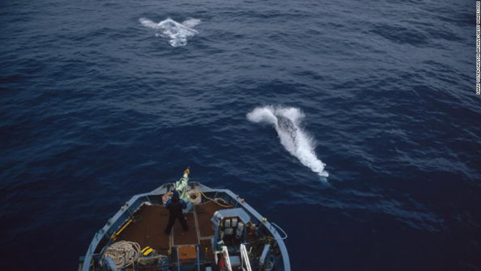 japanese whale research papers
