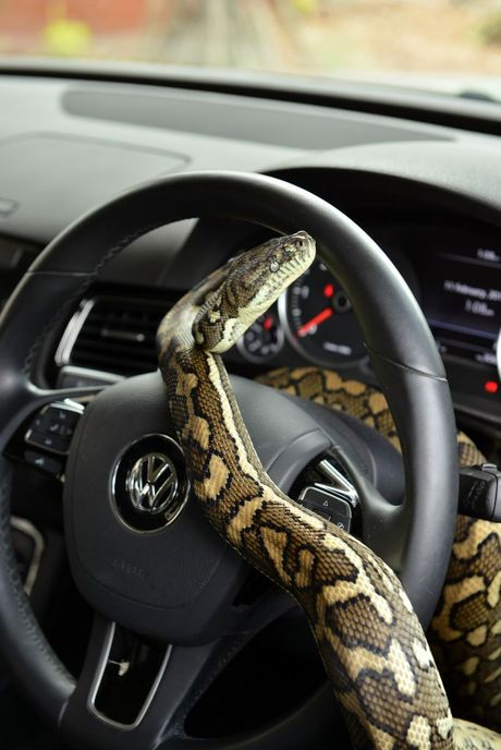 how to drive into the snake